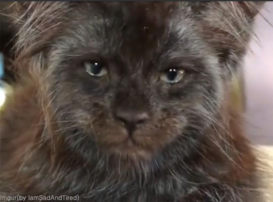 사람 얼굴 고양이 '화제'