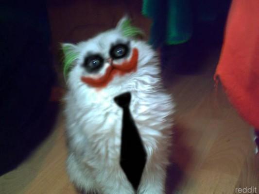 조커 고양이, 동물 학대?