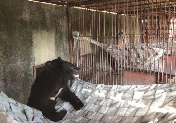 [애니멀리포트]버려진 웅담채취용 사육곰에게 해먹을 선물하다