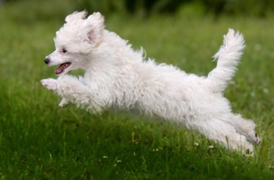[애니멀리포트] 강아지가 조심조심 점프를 해야 하는 이유
