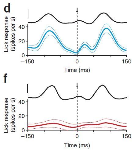 포유류의 뇌는 우리 몸이 만들어내는 소음을 줄이는 노이즈캔슬링 시스템을 진화시켰다는 사실이 2017년 밝혀졌다. 쥐가 물을 먹기 위해 꼭지를 핥을 때 나는 소음(그래프의 검은 선)에 대해 노이즈캔슬링이 일어난 연수의 등쪽 와우핵의 신경 발화 빈도(아래 빨간 선)가 배쪽 와우핵 신경 발화 빈도(위 파란 선)보다 훨씬 낮음을 알 수 있다. '네이처 신경과학' 제공