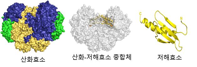 연구팀이 X선 회절분석으로 알아낸 메탄자화균의 산화효소-저해효소 중합체 구조. 한국연구재단 제공