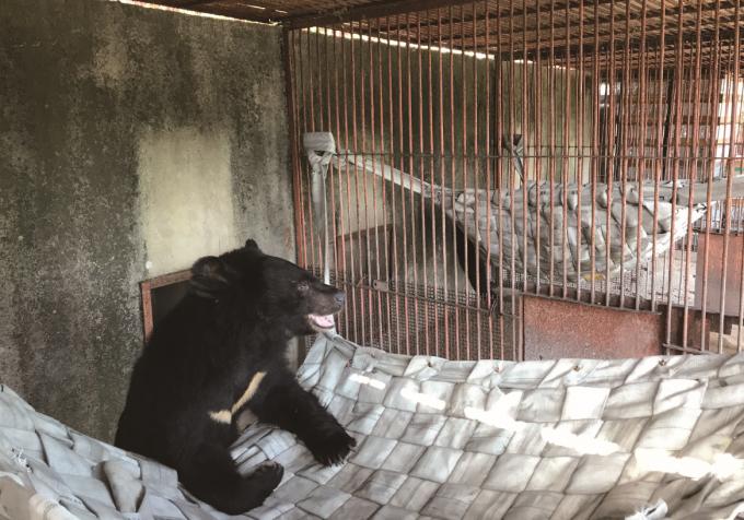 해먹에 기대어 있는 사육곰. 곰 보금자리 프로젝트 제공