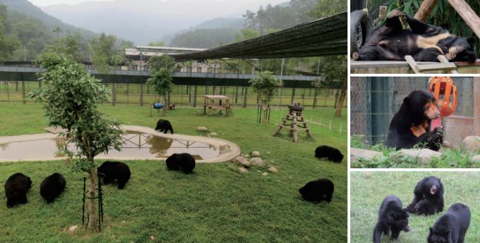 베트남 땀다오 국립공원에 있는 '애니멀스 아시아 곰 생츄어리'.곰 보금자리 프로젝트 제공