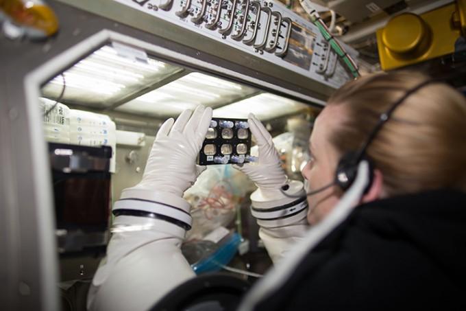 케이틀린 루빈스 우주비행사가 국제우주정거장(ISS)에 서 밀폐된 배양접시에 든 심근세포를 관찰하고 있다. 이 세포는 사람의 혈액세포를 역분화시켜 만든 줄기세포(hiPSC)를 심근세포로 분화시킨 것이다. NASA 제공