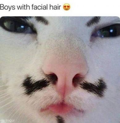 사람 얼굴을 가진 고양이 '화제와 논란