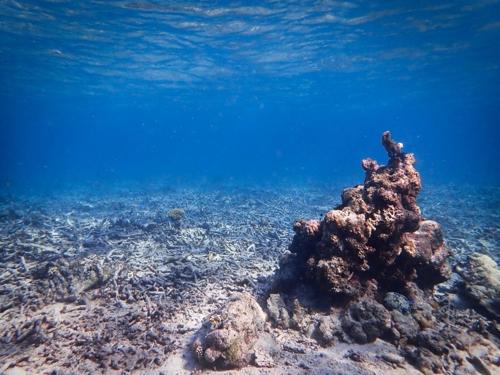 지구온난화로 죽어가는 산호초 살리는 물고기들