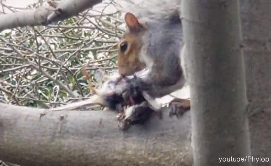 새 잡아 먹는 다람쥐 '포착'
