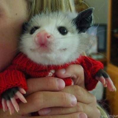 예쁜 옷을 입은 주머니쥐