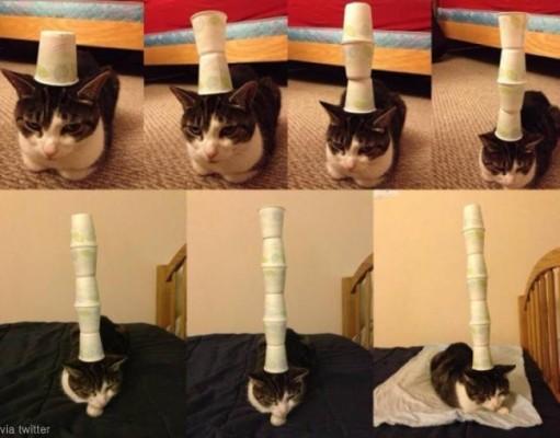 인내심 극강의 고양이