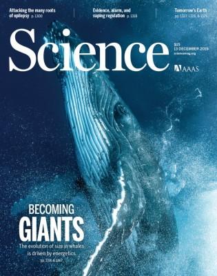 [표지로 읽는 과학] 집채 만한 대왕고래도 몸집에 한계가 있다