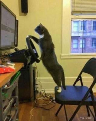몰래 게임하다 들킨 고양이
