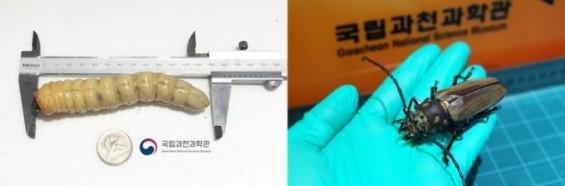 작았던 천연기념물 애벌레, 과학관에서 성체로 탈바꿈