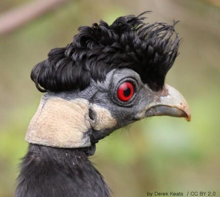 가장 우아한 닭