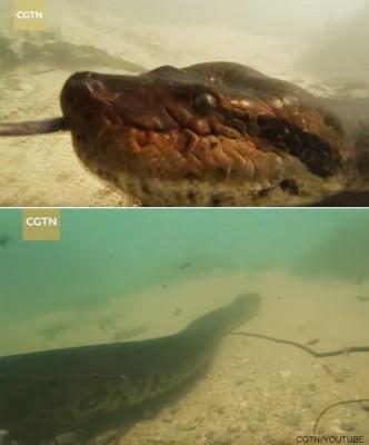 물속에서 만난 7미터 아나콘다