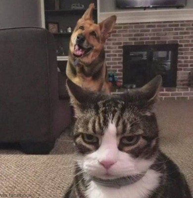 개가 마음에 안드는 고양이