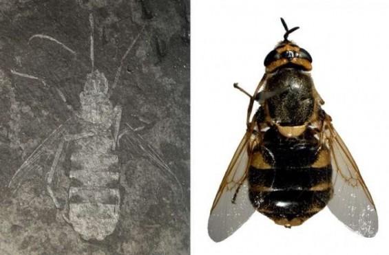진주서 발견된 고대 파리화석에 싸이 '강남스타일' 학명