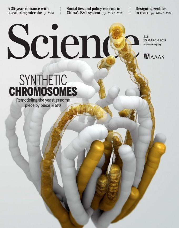 2017년 3월 국제학술지 ′사이언스′ 표지에 실린 합성 효모 이미지. 사이언스 제공