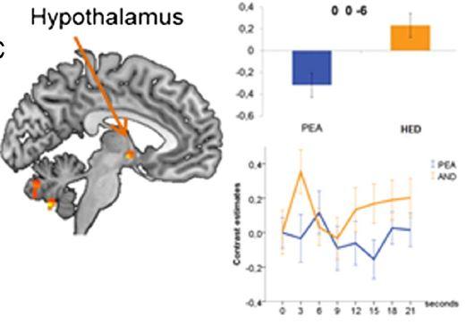 시상하부(hypothalamus)는 장미향의 주성분인 PEA를 맡을 때는 잠잠하지만 자스민향이 연상되는 헤디온(HED)을 맡았을 때는 활성화된다. 이는 서비골(페로몬)수용체인 VN1R1가 헤디온을 감지해 시상하부로 신호를 보낸 결과로 보인다.  '뉴로이미지' 제공