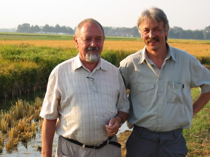 1999년 황금쌀을 개발한 주역인 잉고 포트리쿠스(왼쪽) 교수와 페터 바이에르 교수가 2004년 미국 루이지에나주립대 황금쌀 야외 재배 시험 현장에서 포즈를 취했다. 정작 황금쌀이 필요한 지역에서는 허가가 나지 않아 미국에서 최초로 야외 실험을 진행했다. 황금쌀인도주의위원회 제공