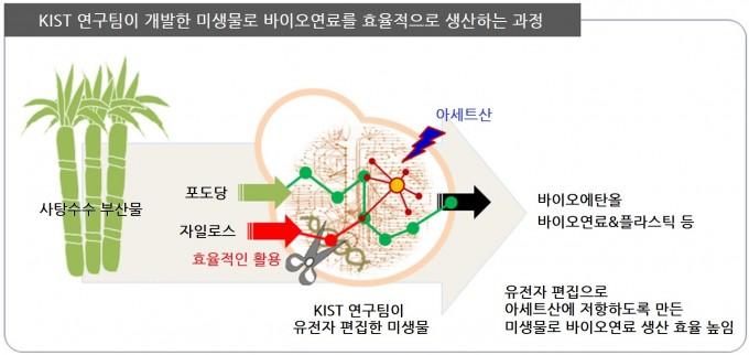 KIST 연구팀이 식량 아닌 바이오매스로 바이오연료를 생산할 수 있는 새로운 미생물을 개발했다.이 미생물은 바이오연료를 생산할 때 저해하는 물질에 대해 저항성을 가졌다. KIST 제공