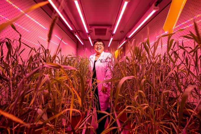 식량 문제 해결 나선 유전자가위 기술/스테판 초우/사이언스
