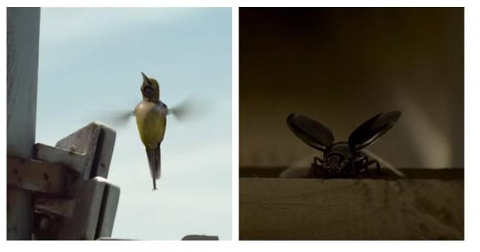2016년 한국에서 개봉한 '아이 인더 스카이'란 영화 속에선 미래첨단과학기술군을 엿볼 수 있다. 벌새와 딱정벌레를 모방한 생체모방 로봇들이 군사작전의 주체가 된다. 유투브 캡쳐