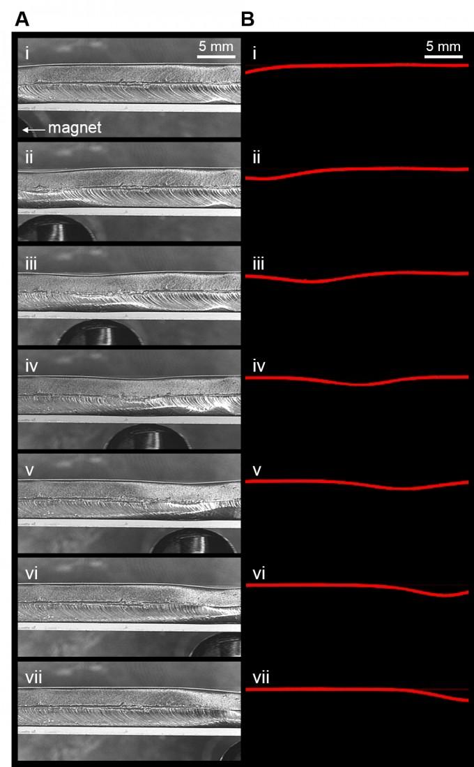 가오리 지느러미를 닮은 오염 방지 기술의 움직임을 연속 촬영했다. 마치 웨이브 댄스를 추듯, 또는 파도가 전달되듯 움직임이 표면을 따라 전달된다. UNIST 제공