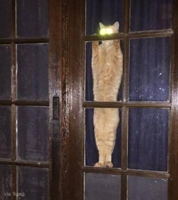주인을 기절시킬 뻔한 고양이