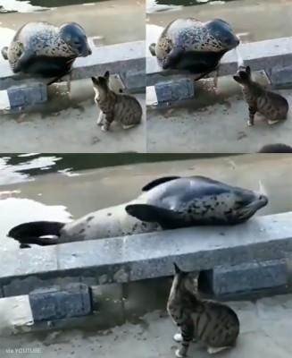 물개를 때린 고양이 '화제'