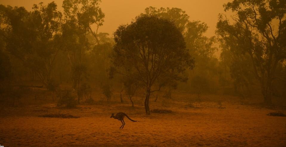 캥거루 한 마리가 5일 오전(현지시각) 호주 캔버라에서 연기가 피어오르는 수풀 앞을 뛰어가고 있다. 캔버라 EPA/연합뉴스