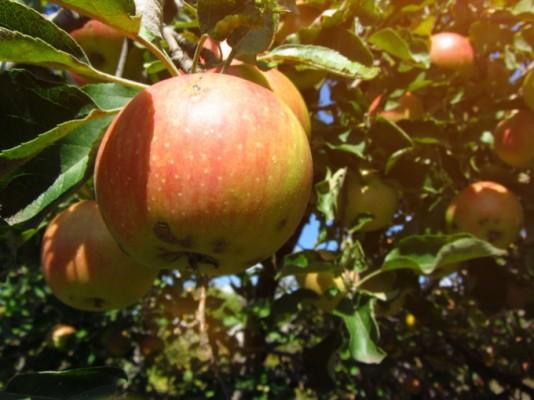 [사이언스N사피엔스] 뉴턴의 사과