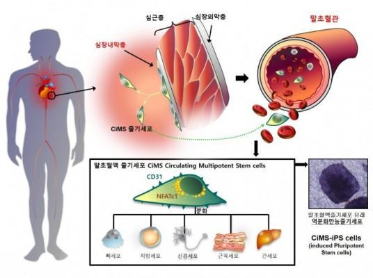 혈액에서 줄기세포 얻는 기술 세계 최초 개발