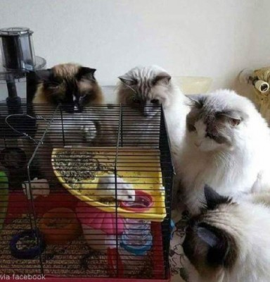 고민에 빠진 고양이들
