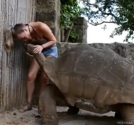 쓰담쓰담을 좋아하는 거대 거북