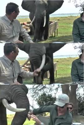 사람들은 공격하는 코끼리