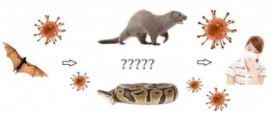 신종 코로나 원인은 박쥐, 하지만 확산 숨은 주범 따로 있다