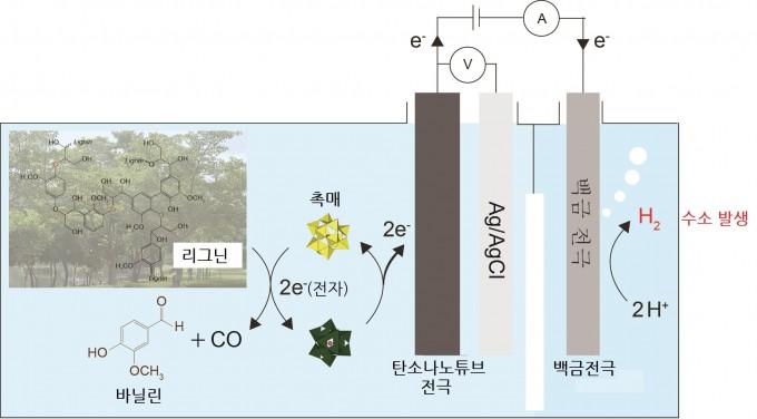 바이오매스인 리그닌을 촉매를 활용해 분해하면 바닐린과 일산화탄소 같은 화학물질이 생성된다. 이때 리그닌에 있던 전자가 촉매로 이동하면서 탄소나노튜브 전극에 전달된다. 백금 전극으로 이동한 전자는 수소를 만든다. UNIST 제공
