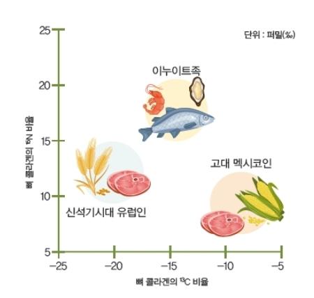 식단에 따른 질소와 탄소 동위원소 비율의 차이. 바다에서 잡은 동물을 주로 먹는 이누이트족은 15N 비율이 상대적으로 높다. 열대 지방에서 C4 식물을 섭취한 고대 멕시코인은 온대 지방에 살면서 C3 식물을 섭취한 신석기시대 유럽인보다 13C 비율이 높다. 동아사이언스DB