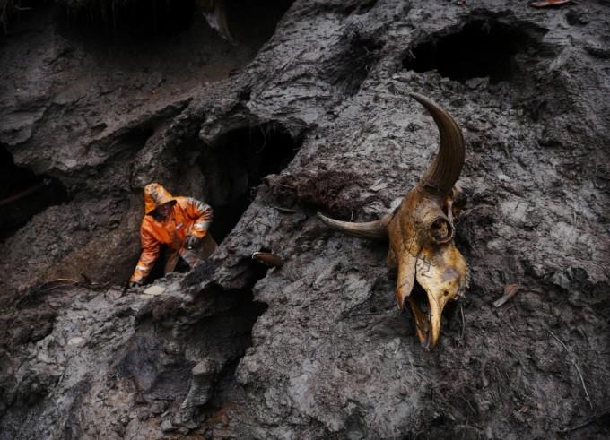 한 상아 사냥꾼이 고압의 물로 뚫은 영구동토층 사이에서 매머드 상아를 찾고 있다. 오른쪽 한 켠엔 사향소의 사체로 추정되는 것이 보인다. Amos Chapple/RFE/RL
