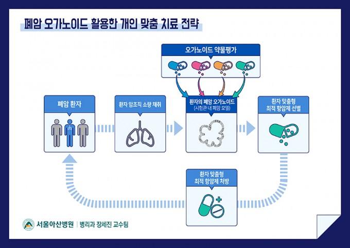장세진 서울아산병원 교수팀이 지난해 10월 환자 별 폐암 조직을 이용해 개인 특성을 살린 오가노이드를 처음으로 만들어 국제학술지 ′네이처 커뮤니케이션스′에 공개했다. 오가노이드를 이용해 환자에게 맞는 약을 찾는 절차는 다른 질병에서도 동일하게 시도되고 있다. 서울아산병원 제공