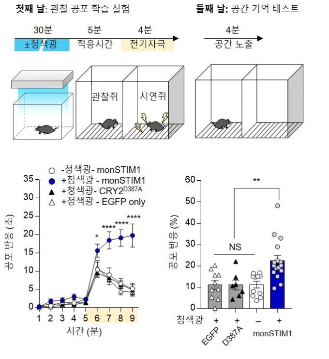 쥐에게 공포기억을 심어주는 실험(왼쪽)과 공포기억이 생성된 공간에 두었을 때의 기억력을 평가하는 시험(오른쪽)이다. 몬스팀원 기술을 적용한 쥐는 공포에 대한 기억력이 강해졌을 뿐 아니라 다음날에도 더 좋은 기억력을 보이는 것으로 나타났다. IBS 제공