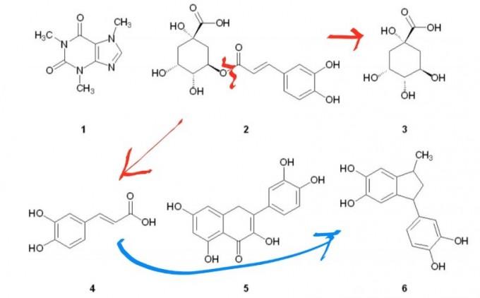 커피 원두에는 1000가지가 넘는 화합물이 들어있는데, 로스팅 과정에서 조성이 바뀌고 새로운 분자가 만들어지기도 한다. 대표적인 커피 화합물 6종의 분자구조로 각각 카페인(1), 클로로겐산(2), 퀸산(3), 카페익산(4), 퀘르세틴(5), 페닐인단(6)이다. 로스팅이 진행되면 클로로겐산이 퀸산과 카페익산으로 분해되고 카페익산은 다시 페닐인단으로 바뀐다. 즉 다크로스팅 원두는 클로로겐산 함량이 낮고 페닐인단 함량이 높다.  '신경과학의 경계' 제공