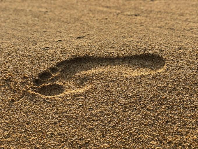 인류가 두 발로 걷게 된 진화의 원동력이 발바닥 구조에 있다는 연구 결과가 나왔다. 발바닥이 체중과 땅을 딛는 충격을 견디는 데 발의 폭 방향의 활 모양 구조가 영향을 미치는 것으로 나타났다. 예일대 제공