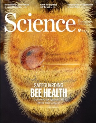 [표지로 읽는 과학] 꿀벌 장내 미생물 조작해 기생충 없앤다