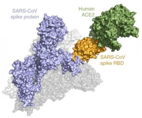 美연구진, 코로나바이러스 감염력 빠르게 알아내는 기술 개발