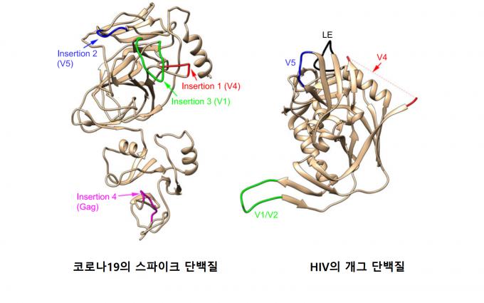 미국 연구팀이 코로나19의 스파이크 단백질(왼쪽)과 HIV의 개그 단백질(오른쪽)의 염기서열을 분석해 3차원 모델링한 것. 인도 과학자들이 주장했던 두 바이러스가 유사점 4곳 중 2곳은 일치하지 않았고, 나머지  2곳은 염기서열이 비슷한 구간이 있었다. 하지만 3차원 모델링 결과 구조적으로 전혀 다르다는 사실을 알아냈다. 신종 미생물 및 감염학 제공
