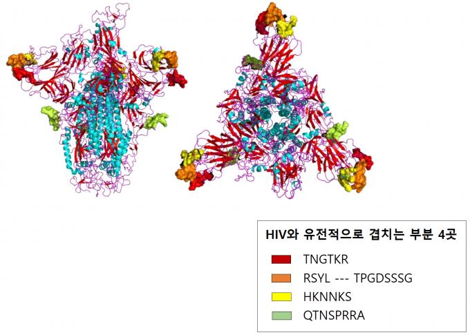 인도 연구팀이 신종 코로나바이러스의 스파이크 단백질을 3D 모델링한 그림. 빨간색과 주황색, 노란색, 연두색으로 표시된 부분이 HIV와 유전적으로 겹치는 부분이다. 바이오아카이브 논문 캡처