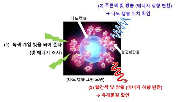 연구팀이 개발한 나노캡슐의 모습이다. 녹색 빛을 쪼이면 나노캡슐의 위치는 파란색으로, 유해물질의 위치는 빨간색으로 표시된다. 한국생명공학연구원 제공
