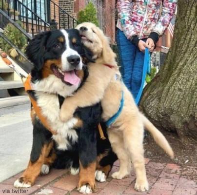성격 좋은 강아지 '인기'
